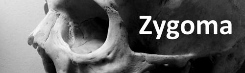 Zygoma_500x149